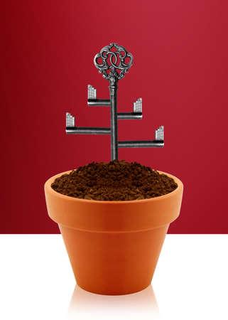 Tree key on garden clay pot  photo