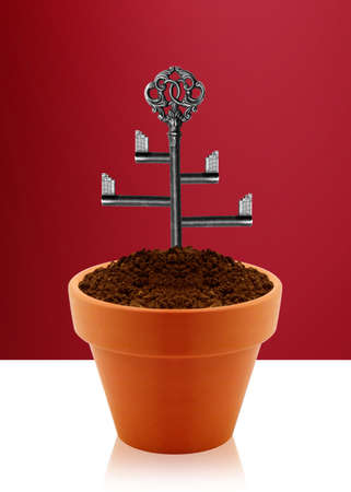 garden key: Tree key on garden clay pot