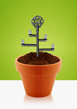 Tree key on garden clay pot. photo
