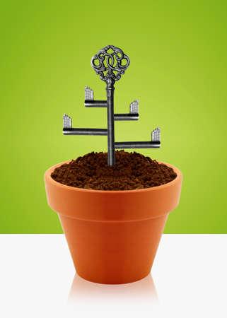 Tree key on garden clay pot. photo