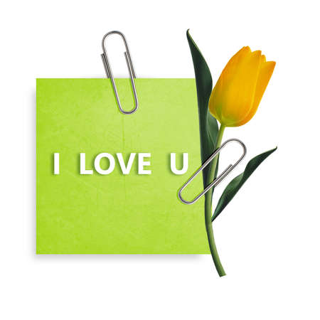Green Note paper with paper clip and yellow tulip on white background. photo