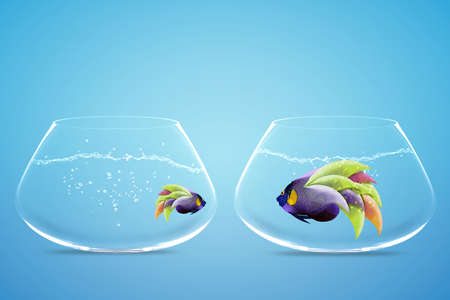 Large and small angelfish,conceptua l image for diet and Lack of equal opportunities. Stock Photo - 15551256
