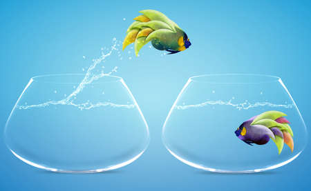 Angelfish jumping to other bowl, Good Concept for new love, freedom, liberty, independence, unrestraint, new Opportunity and challenge concept. Stock Photo - 15551273