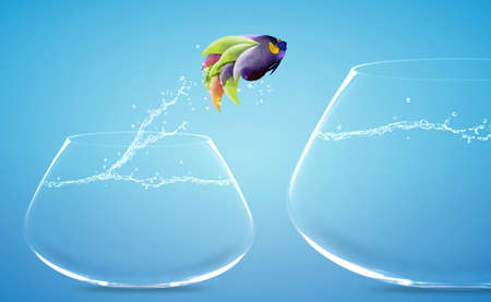 Angelfish jumping to other bowl, Good Concept for new love, freedom, liberty, independence, unrestraint, new Opportunity and challenge concept. Stock Photo - 15551255