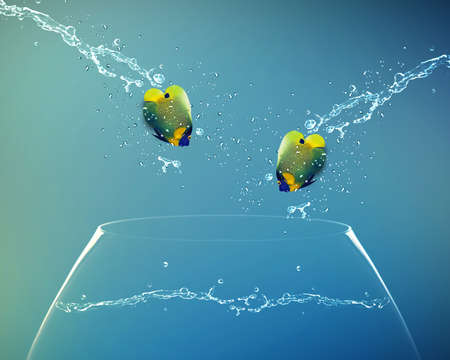 new love: Angelfish jumping to other bowl, Good Concept for new love, freedom, liberty, independence, unrestraint, new Opportunity and challenge concept.