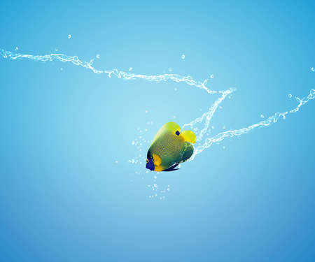 Angelfish jumping, good concept for Recklessness and challenge concept.  photo