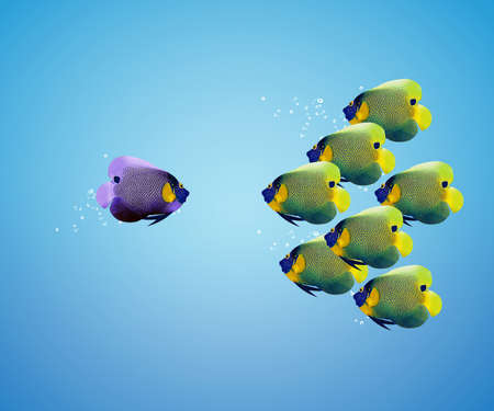 school of fish: big angelfish leading group of angelfish.