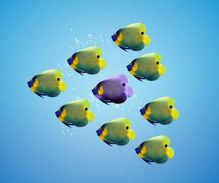 angelfish: Purble angelfish between group of green angelfish.