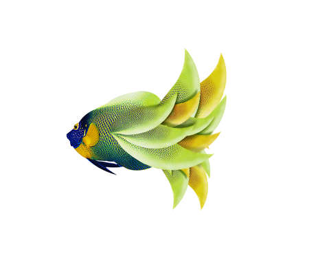 colorful angelfish isolated on white background Stock Photo - 15786980