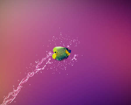 Angelfish jumping, good concept for Recklessness and challenge concept. Stock Photo - 15787106