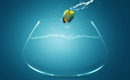 Angelfish jumping to other bowl, Good Concept for new love, freedom, liberty, independence, unrestraint, new Opportunity and challenge concept. Stock Photo - 15787109