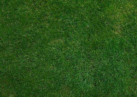 屋外の緑の草地のテクスチャです...