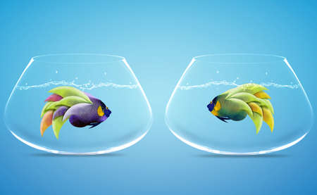 Two Angelfish in Two bowls, Concept for missing, Divorce and Incapacity  photo