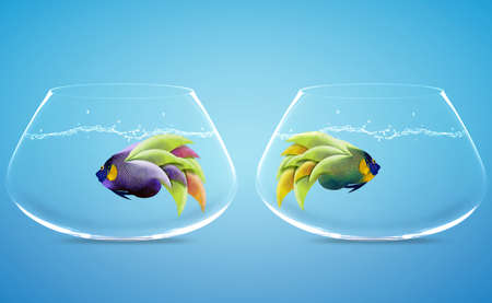 two angelfish in two bowls in difference way photo