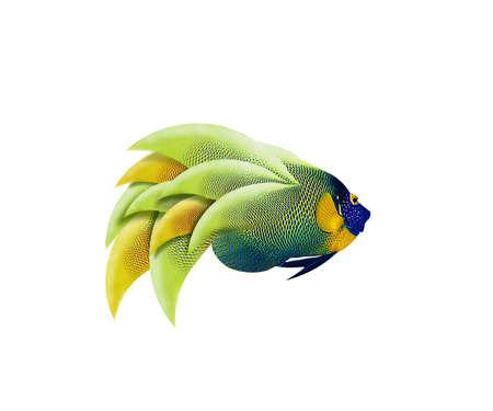 colorful angelfish isolated on white background Stock Photo