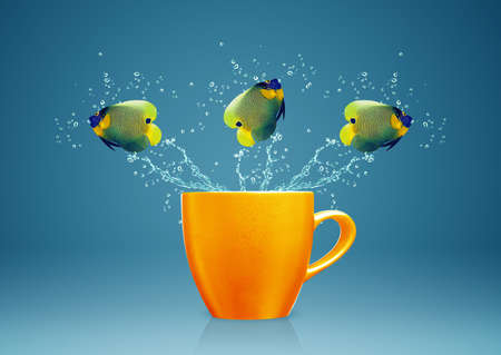 Angelfish jumping out of cup with water splashes and Acrobatic movement. Stock Photo - 16822926