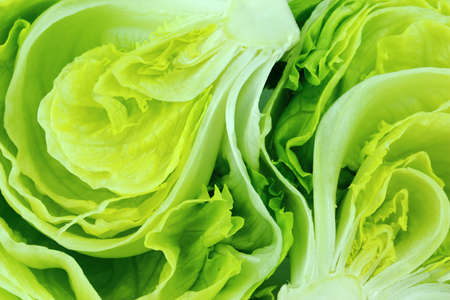 leaf close up: Fresh Green Iceberg lettuce .