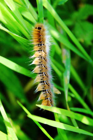 caterpillar, swallowtail, spring worm on green leaf . Stock Photo - 18700877