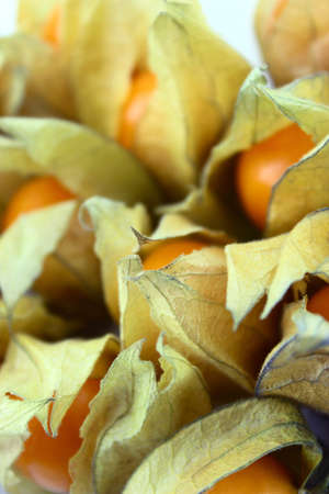 physalis: Cape gooseberry, physalis isolated on white background.