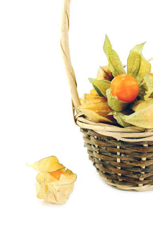 husk tomato: Cape gooseberry, physalis in basket isolated on white background.