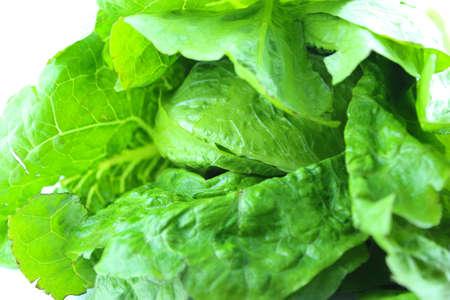 vibrat color: Fresh Green lettuce .