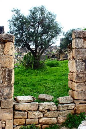 umm: Umm Qais, Gadara City north-west of Jordan