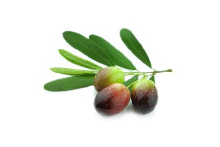 rama de olivo: Aceitunas negras con hojas sobre un fondo blanco Foto de archivo