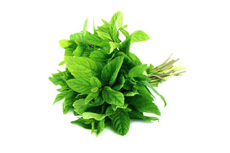 plant life: fresh mint leaves on a white background