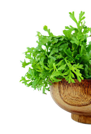 Fresh water cress or garden cress herbs isolated on white background  photo