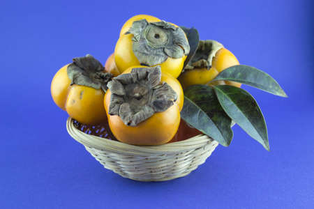 persimmon fruit isolated on blue background. photo