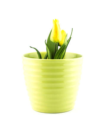 flowerpots: pottery flowerpot on white background. Stock Photo