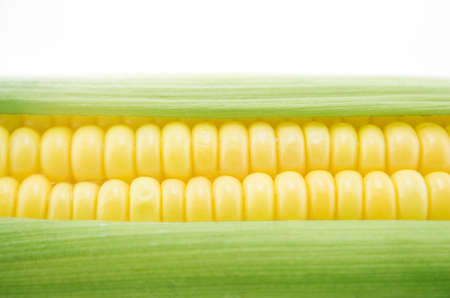corn cob between green leaves . photo