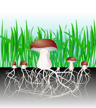 vegetative: Mushrooms and vegetation  Reproduction fungus  Mycelium vegetative part of a fungus, consisting of a mass of branching, thread-like hyphae  Spore