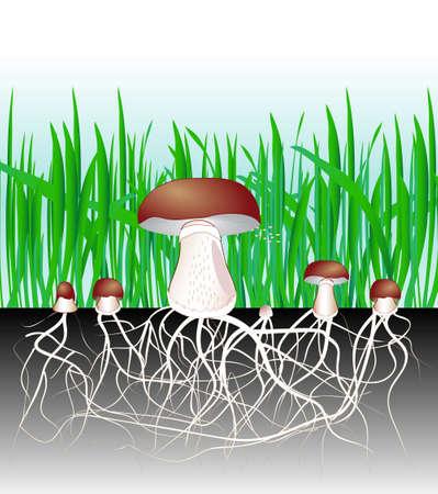 sporen: Pilze und Vegetation Vervielf�ltigung Pilzmyzel vegetative Teil eines Pilzes, bestehend aus einer Masse von Verzweigungen, fadenf�rmige Hyphen Spore