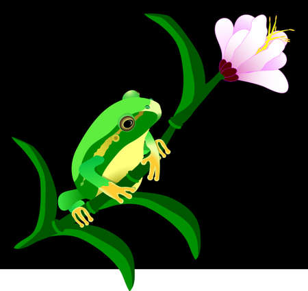 funny frog: Green hula frog on a flower