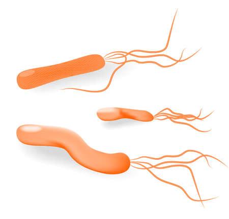 ulceras: Las bacterias Helicobacter pylori es una bacteria Gram-negativa microaerof�lica encuentra en el est�mago