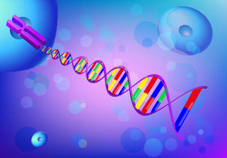 Cell, chromosome and DNA  background Vector