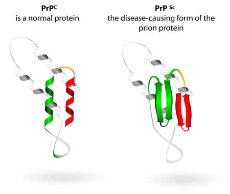 currently: Prion an composed of protein in a misfolded form   Prions are responsible for the transmissible mad cow disease, Creutzfeldt-Jakob disease  All known prion diseases are currently untreatable and fatal