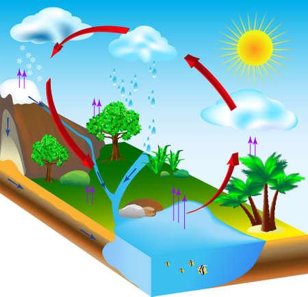 tree diagram: ciclo dell'acqua diagramma di condensazione, evaporazione e ambiente Vettoriali