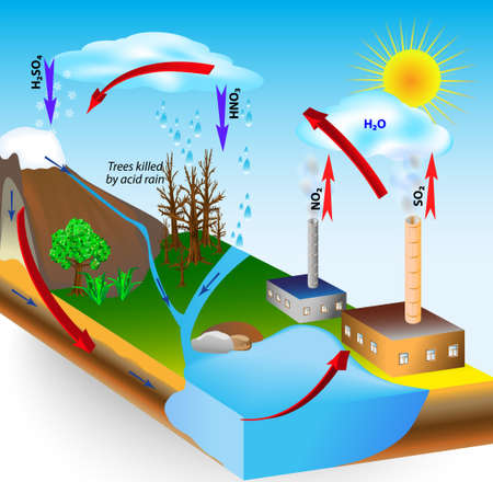 Acid rain is caused by emissions of sulfur dioxide and nitrogen oxide, which react with the water molecules in the atmosphere to produce acids  Low pH  Trees killed by acid rain  Kyoto Protocol Stock Vector - 18963179