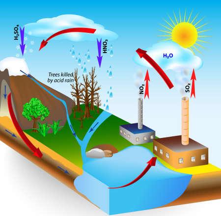 Zure regen wordt veroorzaakt door de uitstoot van zwaveldioxide en stikstofoxide, die de watermoleculen in de atmosfeer reageren op zuren produceren Lage pH Bomen gedood door zure regen Kyoto-protocol