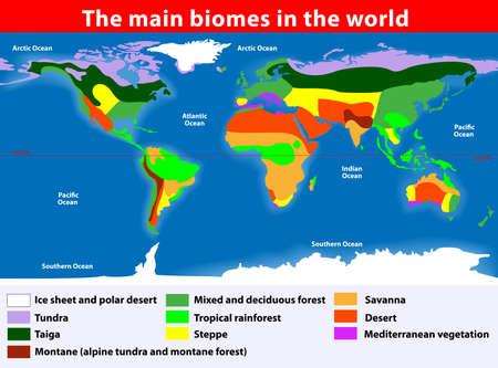 тундра: Биотопы Земли Иллюстрация