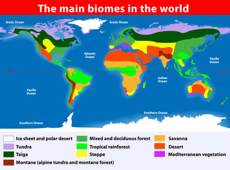 desert vegetation: Biotope  Earth