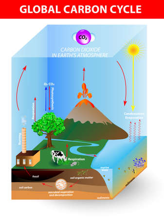 carbon cycle  diagramshows the movement of carbon between land, atmosphere, and oceans Stock Vector - 19403436