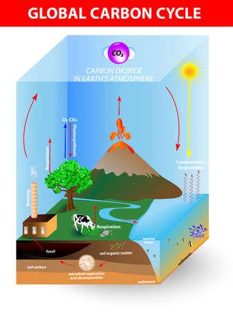 dioxido de carbono: ciclo del carbono diagramshows el movimiento del carbono entre la tierra, la atmósfera y los océanos Vectores