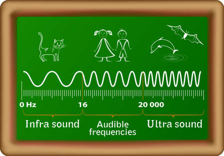 Sound frequency ranges for infrasound, audible and ultrasound waves and the corresponding animals that can hear them  Humans are only able to hear between 20Hz to 20,000Hz, anything higher than 20,000Hz or lower than 20Hz cannot be heard  Vector