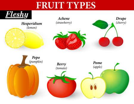 rodzaje owoców. Mięsiste owoce mogą być podzielone na te, utworzone z jednego kwiat i sole utworzone z grupą kwiatów. Mogą mieć jeden lub kilka nasion nasiona w. Ilustracje wektorowe