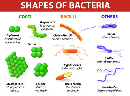 bacteria: Common bacteria infecting human   Illustration