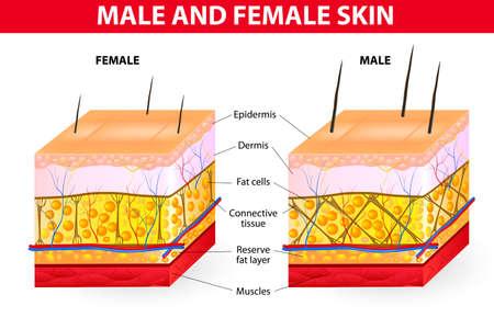 肌の男性と女性  イラスト・ベクター素材