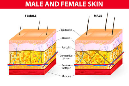 human skin texture: Della pelle maschile e femminile Vettoriali